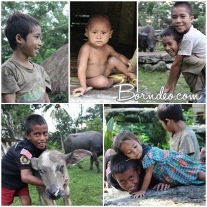 SUMBA by Borndeo (2)